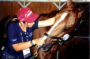 Kate treating Baloubet du Rouet at the Sydney 2000 Olympic Games, 3 x World Cup Champion show jumper