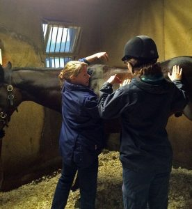 Chartered physiotherapist Kate Stephens explains back assessment to a veterinary physiotherapy student at the British Racing School, 10.12.16