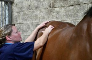 Kate Stephens BSc (Hons) MSc MCSP ACPAT(A) is a chartered veterinary physiotherapist