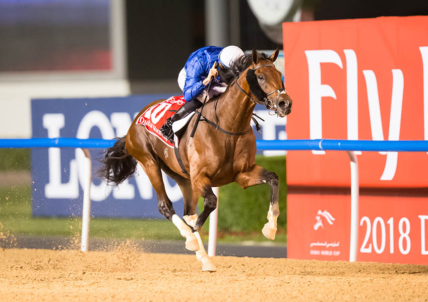 Thundersnow Thunder Snow, two-time winner of the Dubai World Cup, 2018 and 2019